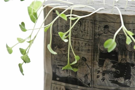 koshi kawachi manga farming sprouts diy