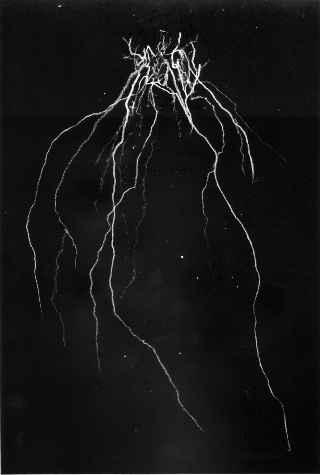 blackmetalcytwombly-volume-1-3-Andrew-McLeod