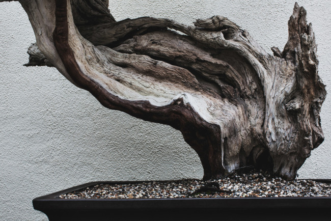 stephen-voss-photographs-bonsai-in-training-4