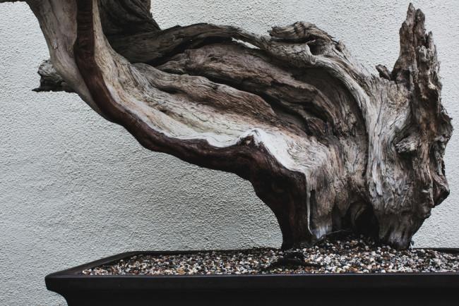 stephen-voss-photographs-bonsai-in-training-4
